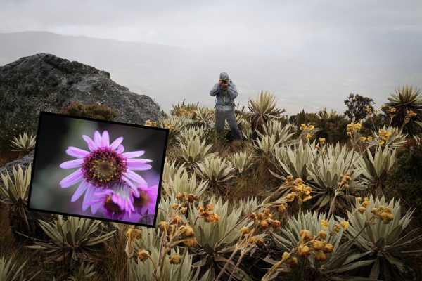 Andes Ecotours Mountaintop Páramo Trek