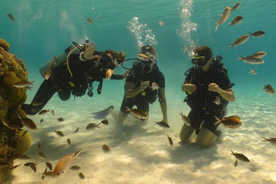 Coral divers PADI Open Water Course