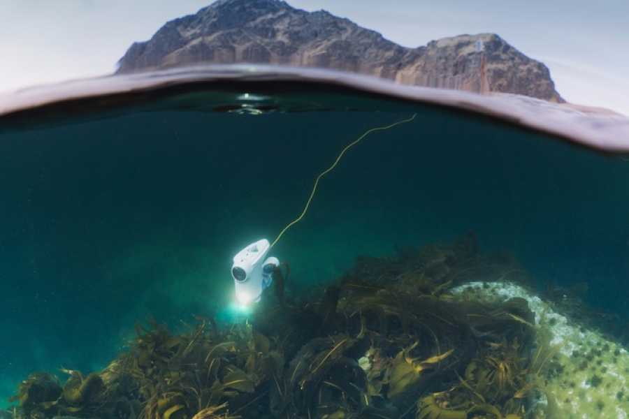 Fjordexpedition Underwater Sightseeing