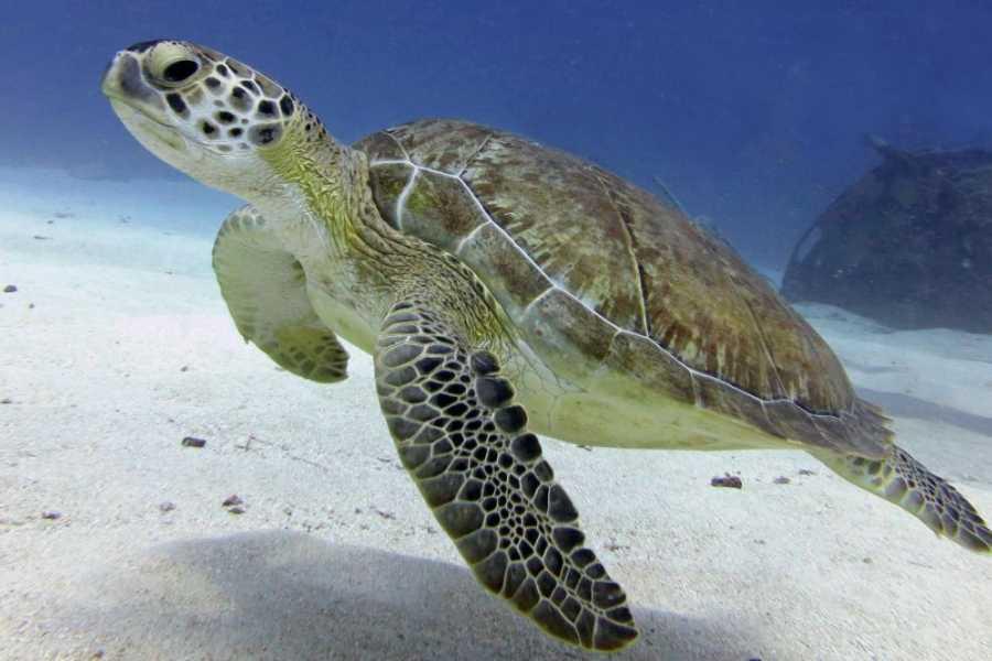 Aqua Mania Adventures Dock Maarten - Single Shallow Dive