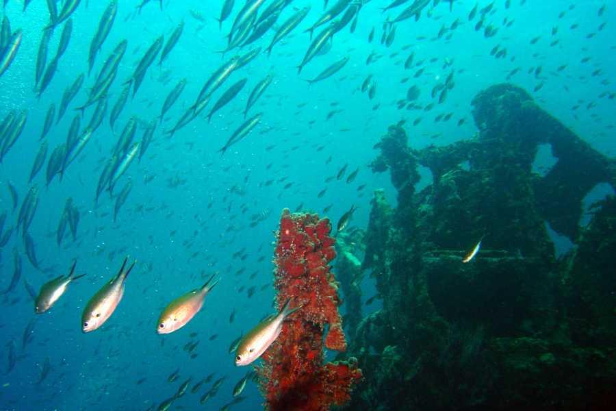 Aquanauts Grenada SGU 1 Tank Boat Night Dive @ Anina