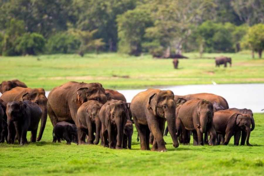Cinnamon Holidays Private Limited Tracking the Great Gathering of Elephants