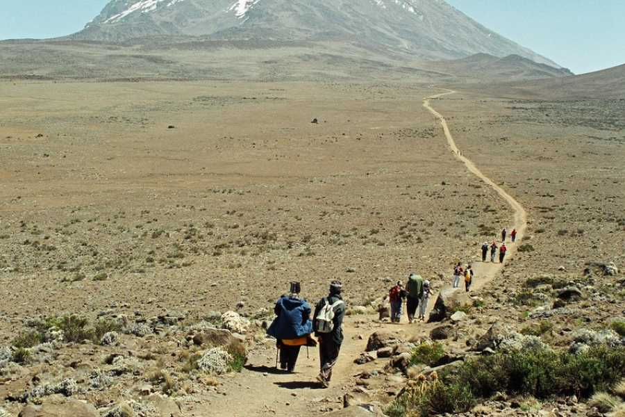 Absolute Adventure Kilimanjaro - Lemosho Route