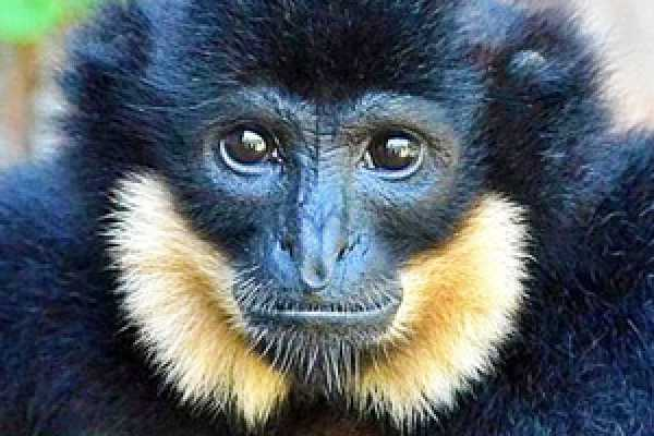 'Gibbon Experience Cambodia' 2 days Trek