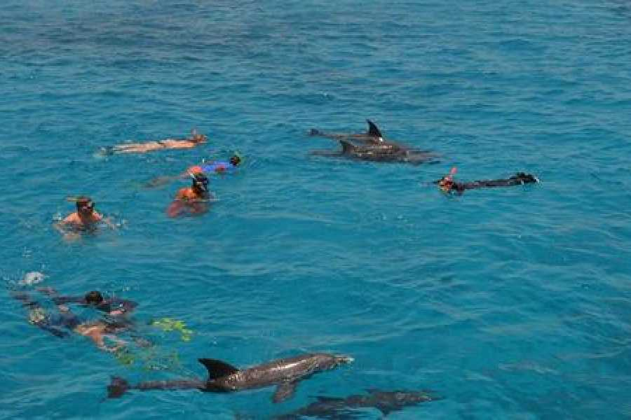 Excursies Egypte Private Snorkeling Boat Trip to Dolphin house from Hurghada