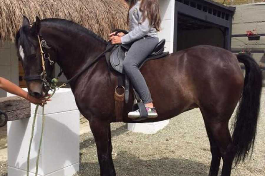 Medellin City Tours FUN HORSE RIDES NEAR BOGOTA