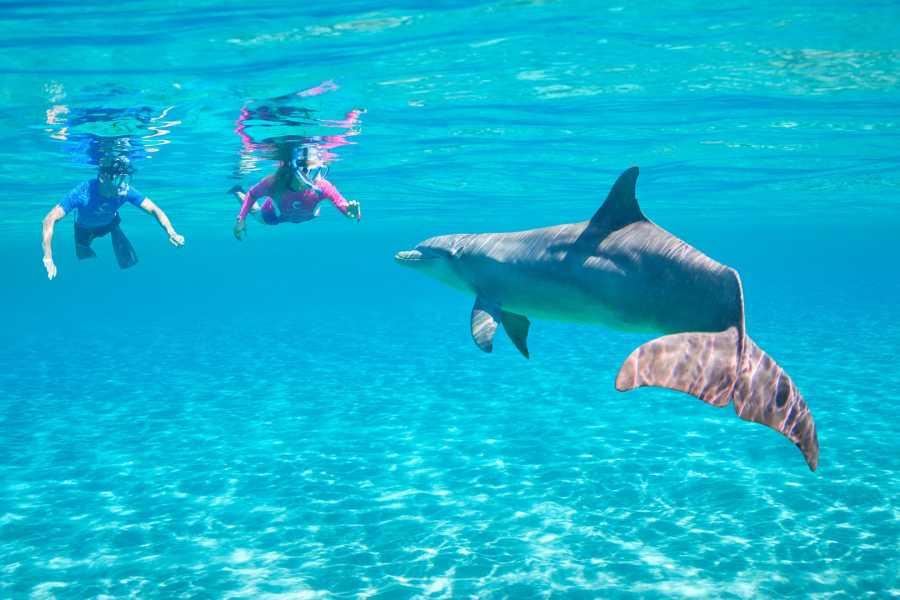 Excursies Egypte Voyage en apnée à Satayh Dolphin Reef