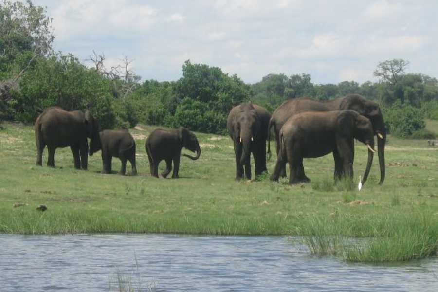 e-Tourism t/a SimplyTravel Chobe National Park-Ihaha Campsite