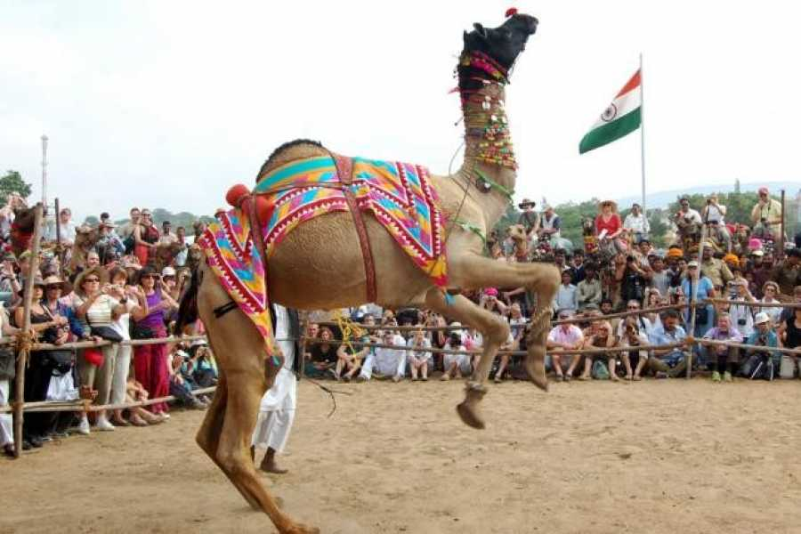 Walkbout International LLC Culture & History - India: Royal Rajasthan with Pushkar Camel Fair  November 03-14,