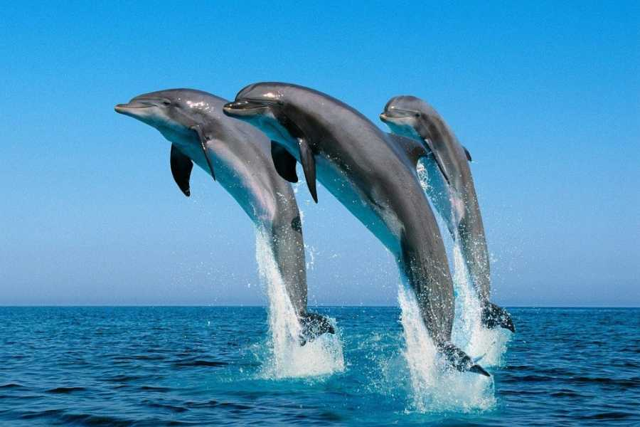 Walkbout International LLC Safari and Wildlife - Kenya: Beach,Wildlife & Safari Holiday- 6 Days