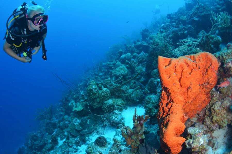 Coral divers PADI Referral Open Water Diver