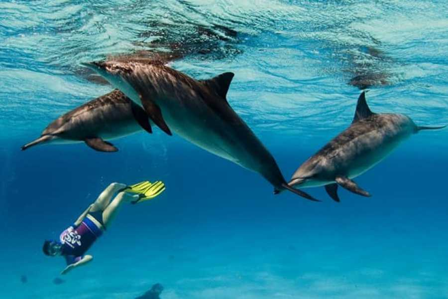 PRIVATE BOAT SNORKELING TRIP To SATAYH DOLPHIN REEF FROM MARSA ALAM