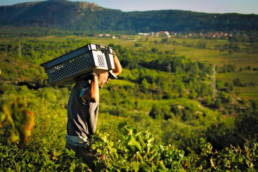 Insider Holidays Morning Wine Lover's Tour of Peljesac Peninsula