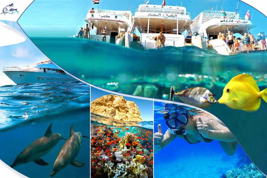 Excursies Egypte Ras Mohammed Day  Snorkeling Tour by Boat From Sharm El Sheikh
