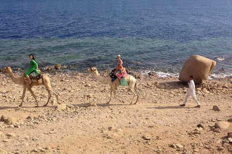 Excursies Egypte Snorkel at Blue Hole, white Canyon Safari & Camel Safari from Sharm el Sheikh