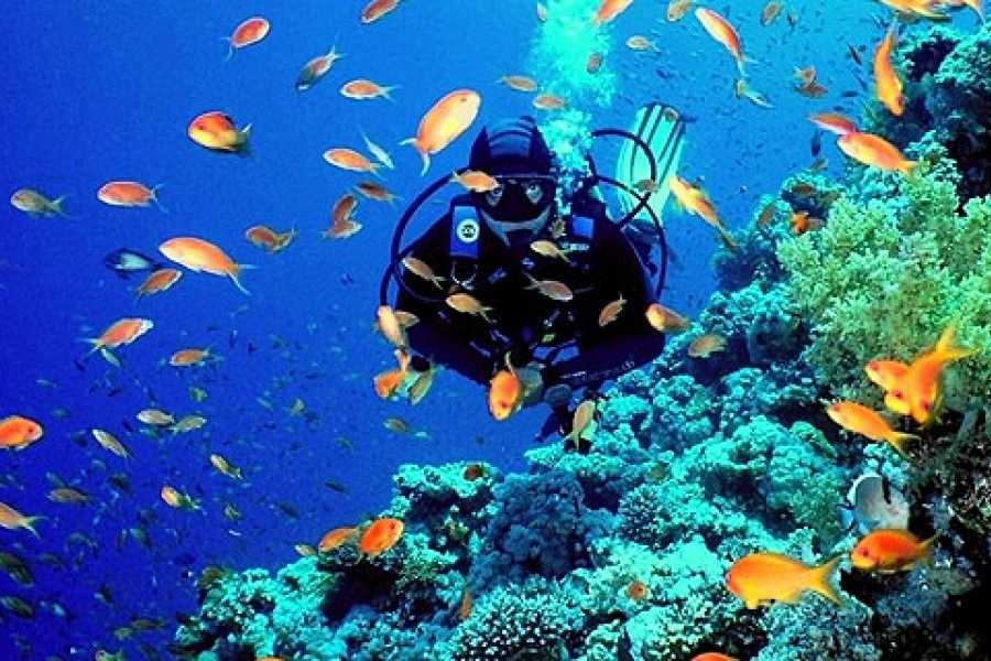 Excursies Egypte Day Scuba Diving Tour from Sharm el Sheikh