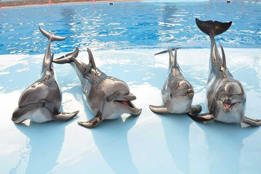 Excursies Egypte Dolphin Show Tour from Hurghada