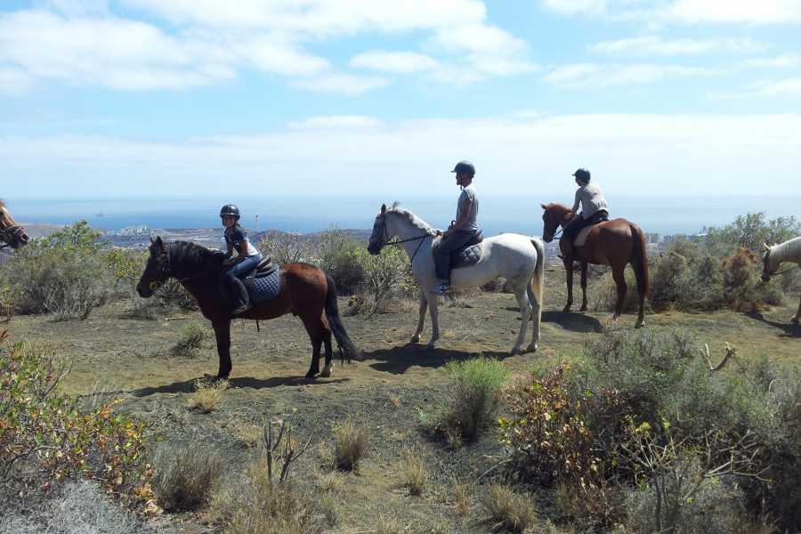 Hipica Canaria 1 Hour Horse Riding Tour: Vulcanic excursion
