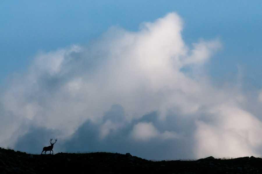 Wildlife Adventures The mating season of deers
