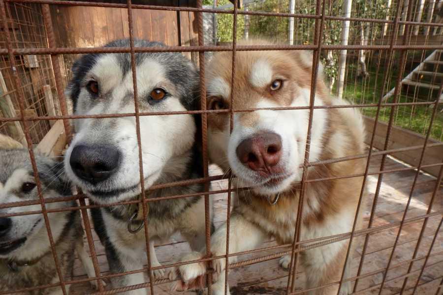 Velkommen til Vaset Besøk i hundegården