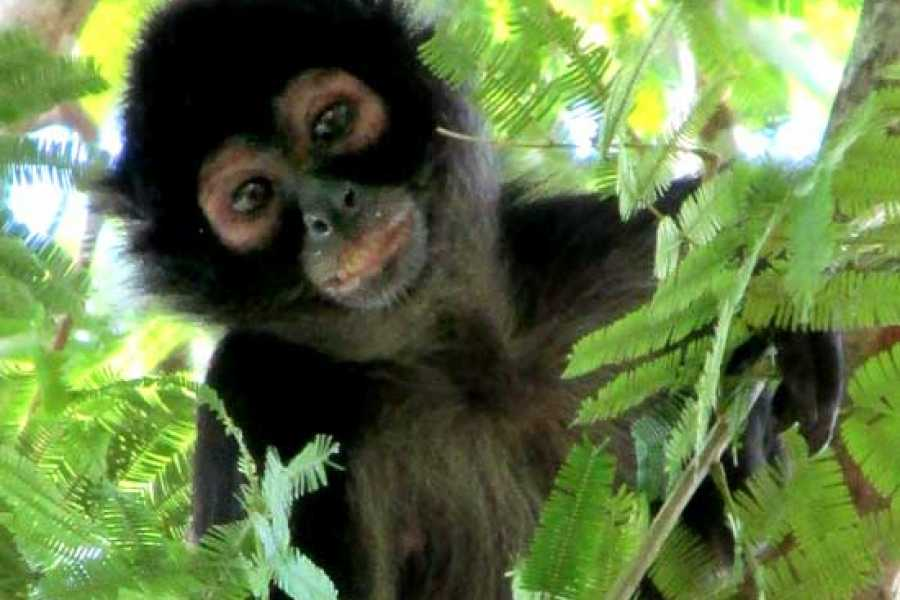 Gem Trips Morning Lakes, Islands, Monkeys and Museums tour