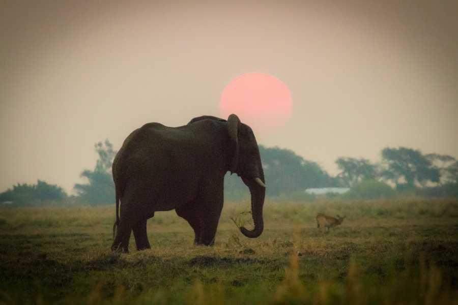 Graffiti Sotto la Lente Botswana - Okavango & Wildlife Adventure (South Route)