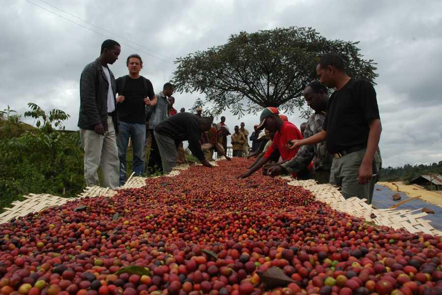 Walkbout International LLC Gastronomic Experiences - Ethiopia - 13 Day Coffee Tour #2