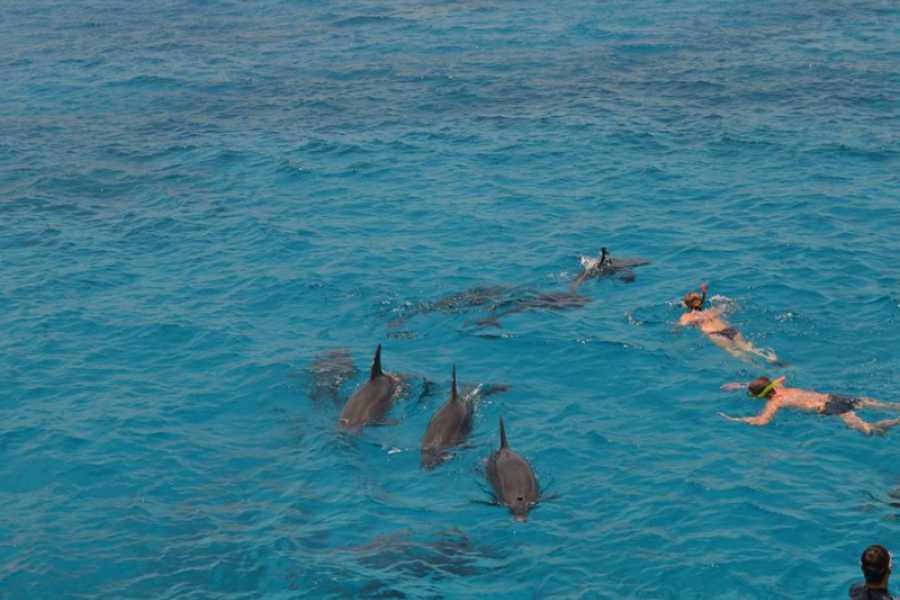 Marsa alam tours Delfinhaus Tour von Makadi