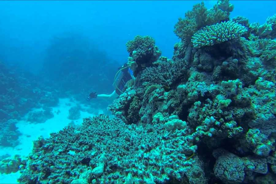 Marsa alam tours One Day Scuba Diving From Makadi