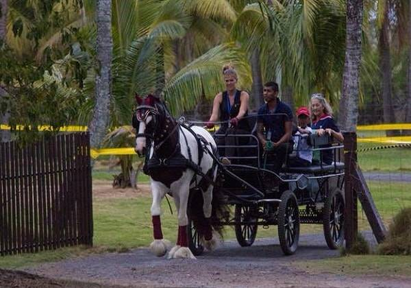 Horse Carriage Ride in Paradise
