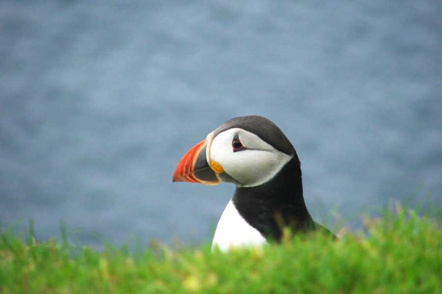 Hebridean Adventures The Shiants - 1 Night Wildlife Cruise