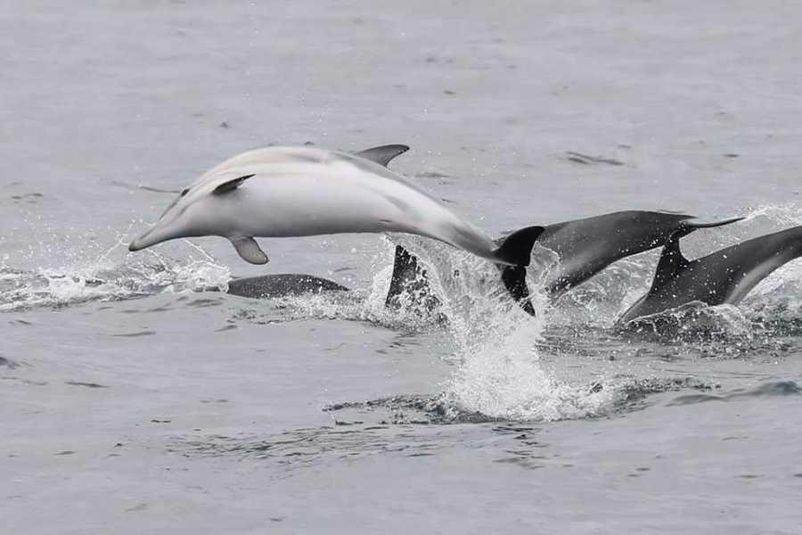 Hebridean Adventures Full Day Wildlife Boat Trip
