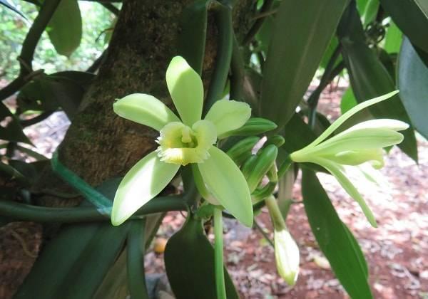 Visite d'un jardin tropical