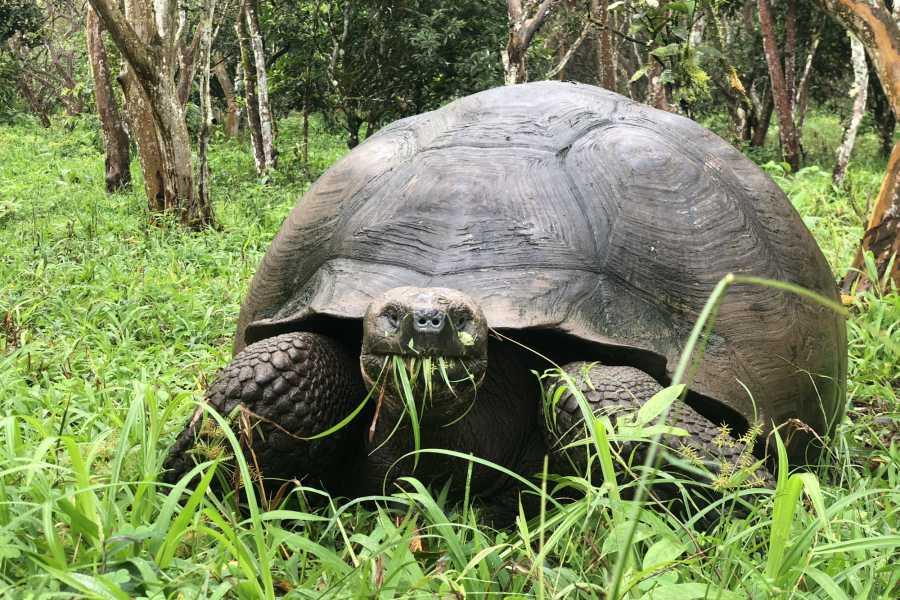 Galapagos Shuttle LLC Giant Tortoise Reserve + Lava Tube   8AM