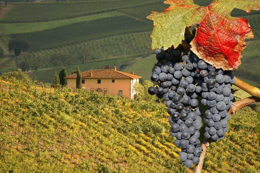 Di Nocera Service 3 days Tuscany Wine Tour