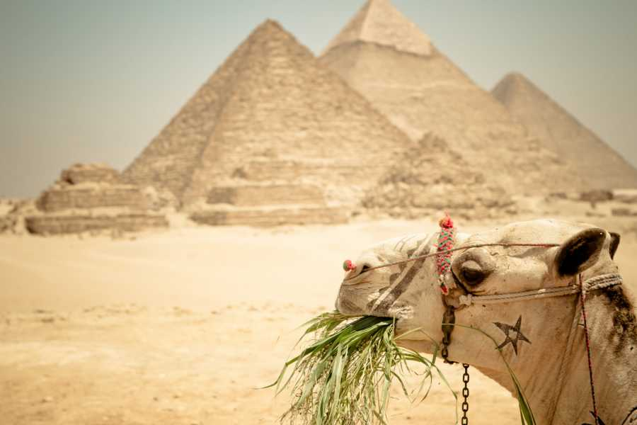 EMO TOURS EGYPT 10 Hours Cairo Layover Tours Visit Giza Pyramids and Egyptian Museum and Bazaar
