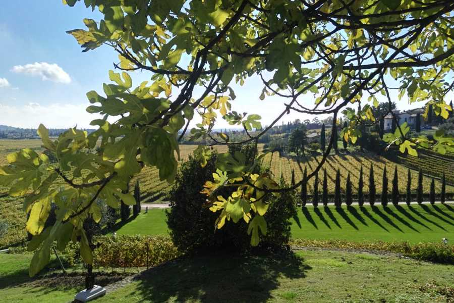 VERONALITY Verona Wine Tour