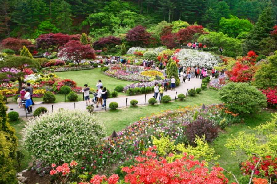 Kim's Travel SP 06 Nami Island & Garden of Morning Calm Special Offer Tour