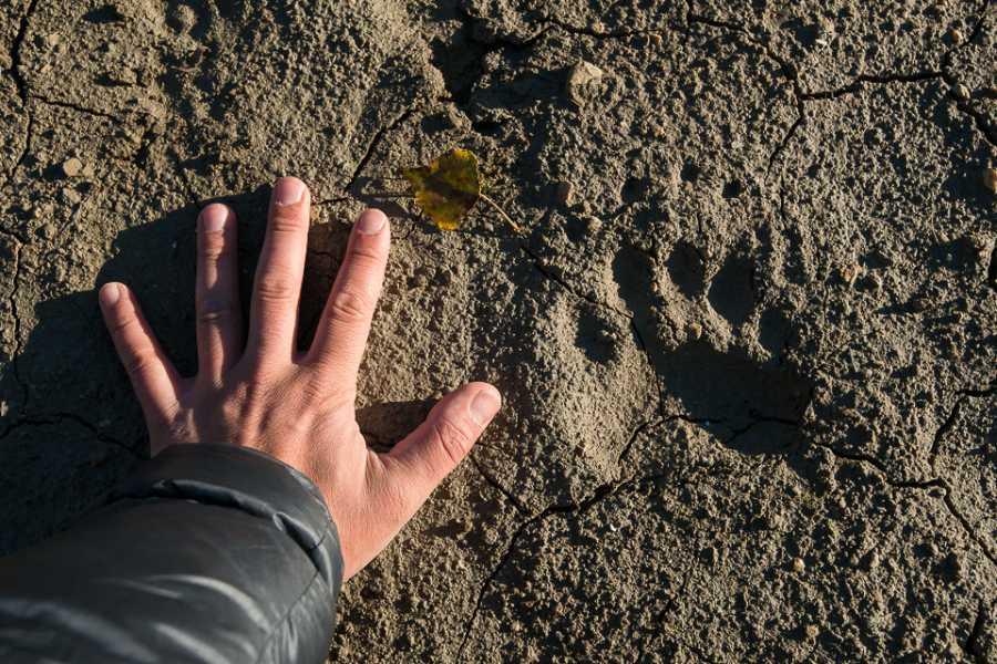 Wildlife Adventures Piccoli esploratori, alla scoperta delle tracce degli animali