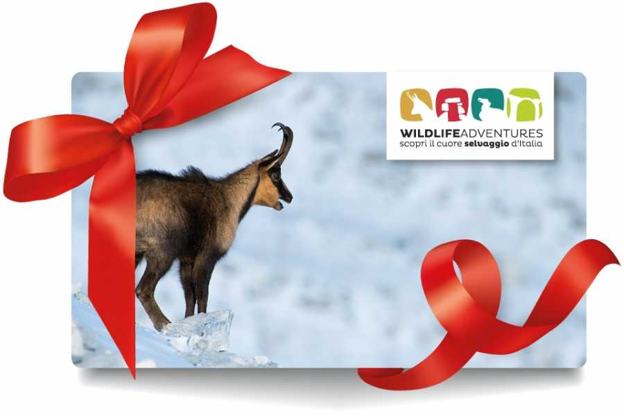 Wildlife Adventures Gift card € 150,00