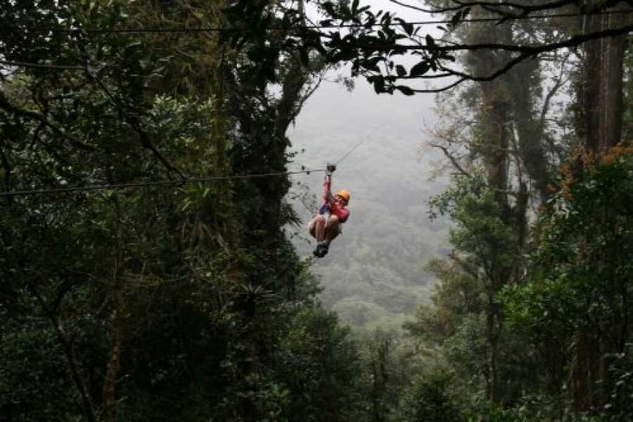 Tour Guanacaste On-Line Monteverde Cloud Forest Journey by TAM