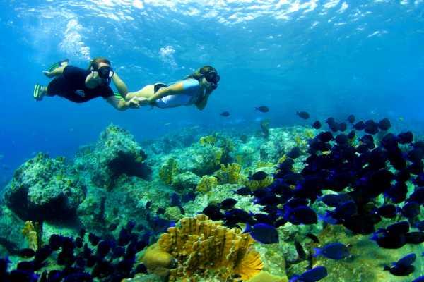 Blue C Watersports Half Day Snorkel Trip