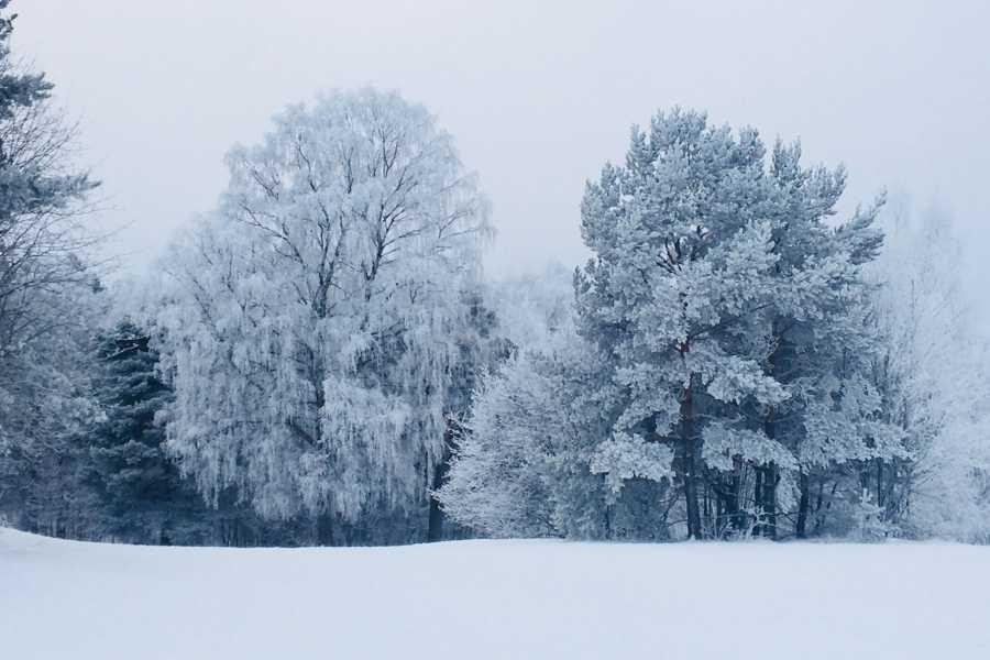 Ekebergparken Hakkespettene: Vinterverksted