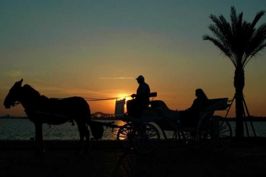 EMO TOURS EGYPT Aswan City Private Tour by Horse Carriage