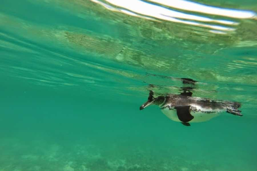 Galapagos Shuttle LLC Snorkel | Pinzon Is - Bahia Borrero