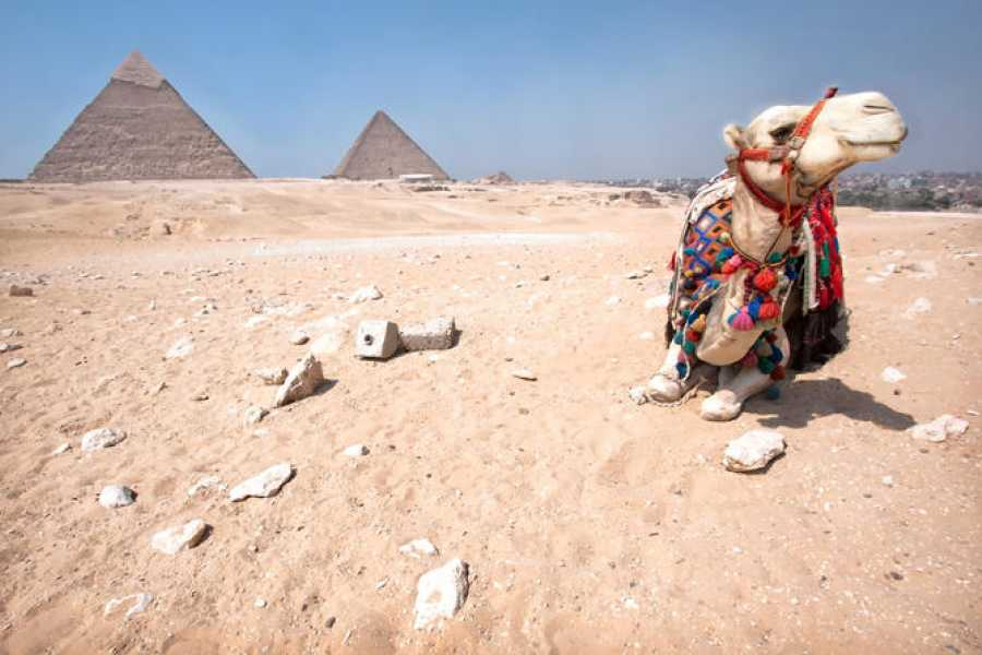 EMO TOURS EGYPT Camel Ride at Giza Pyramids During Sunrise