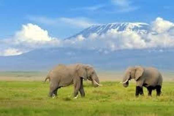 2 days Amboselli National Park