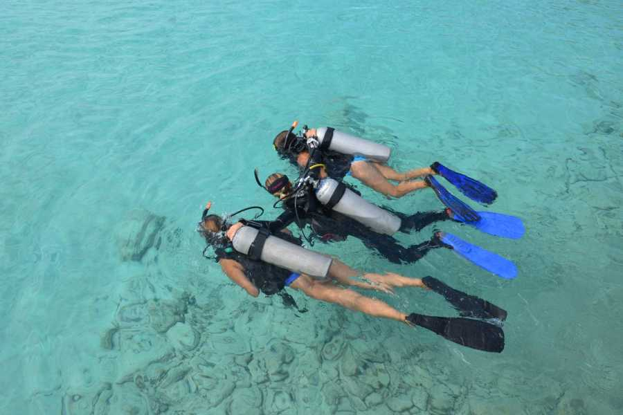 Coral divers February Special
