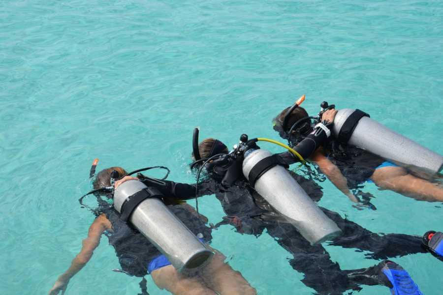 Coral divers PADI Discover Scuba Dive (Schnuppertauchgang)