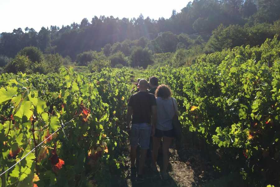 Nature4 O Vinho Verde
